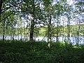 2008, Älvleden Avesta - panoramio (3).jpg