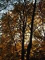 2011-10-31-155004 .JPG - panoramio.jpg