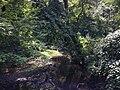 2013-08-17 13 29 42 View down the Shabakunk Creek from the Green Lane Fields pedestrian bridge.jpg
