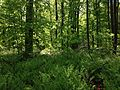 2014-05-11 10 33 24 View of a ferny area from the Old Forge Trail in Clayton Park, Upper Freehold Township, New Jersey.JPG