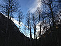 2014-11-11 15 46 59 Bare Aspens along the Changing Canyon Trail in Lamoille Canyon, Nevada.JPG