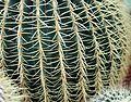 20150228 Cactus cuscino sedile Suocera 3.jpg