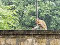 20160124 Sri Lanka 3778 crop Polonnaruwa sRGB (25770806765).jpg