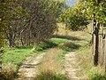 2433 Lobosh, Bulgaria - panoramio (26).jpg