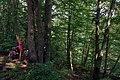 26.7.16 Purkarec to Hluboka nad Vltavou 45 (28571786375).jpg