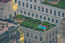 Flat rooftop with greenery and a small rectangular pool