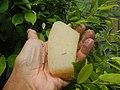 4087Ants Common houseflies foods delicacies of Bulacan 51.jpg