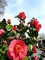 5944 Arcen, Netherlands - panoramio (2).jpg