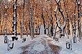 80-391-5003 Kyiv Volodymyrska Hirka RB.jpg