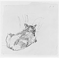 A Cat Resting on All Fours, Seen from Behind MET 260552.jpg