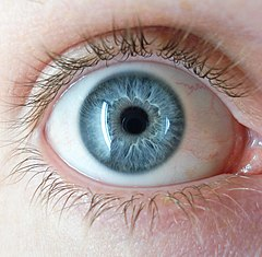 https://upload.wikimedia.org/wikipedia/commons/thumb/8/84/A_blue_eye.jpg/240px-A_blue_eye.jpg