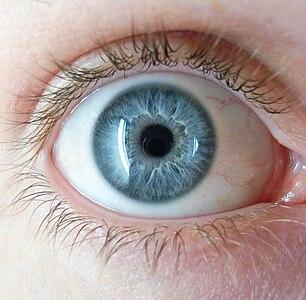 症候群 青い 目 デン ブルグ ワール