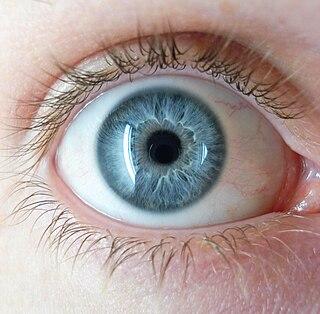 Iris (anatomy) Part of an eye