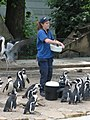 A handful of penguin chum, delicious (540061848).jpg