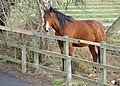 A horse on Anlaby Common - geograph.org.uk - 690271.jpg