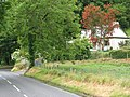 A red tree - geograph.org.uk - 852387.jpg
