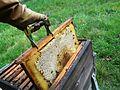 Abeilles et ruches 02.JPG