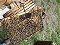 Abeilles et ruches 10.JPG
