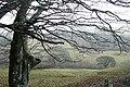 Above Llandeilo'r-Fan - geograph.org.uk - 1175810.jpg