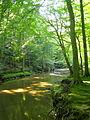 Accotink Creek Trail-2 (3613076023).jpg