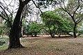 Acharya Jagadish Chandra Bose Indian Botanic Garden - Howrah 2011-02-20 1570.JPG