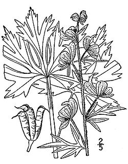 Pepper cultivation together with Profile moreover Aconitum also Garden Design Planting Plan further Stock Photo Jeffersonia Or Rheumatism Root Vintage Engraving Old Engraved Illustration 38984275. on perennial plant