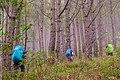 Akiki Trail of Mt. Pulag.jpg