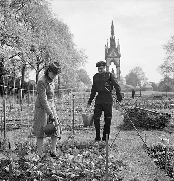 File:Allotments in Kensington Gardens, London, all part of the 'Dig for Victory' scheme in 1942. D8336.jpg