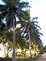Alongside the beach in Vailala (Wallis and Futuna).jpg