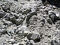 Alpine glacial till (Pleistocene; Lee Vining Canyon, Yosemite National Park, California, USA) 4.jpg