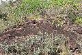 Alto Araguaia - State of Mato Grosso, Brazil - panoramio (1105).jpg