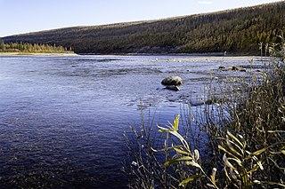 Amga (river)