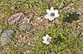 Anemone 12.jpg