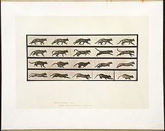Animal locomotion. Plate 717 (Boston Public Library).jpg