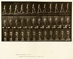 Animal locomotion. Plate 74 (Boston Public Library).jpg