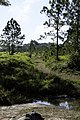 Anodard Pond - Phu Kradueng National Park 05.jpg