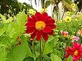Apis mellifera e Flor.jpg