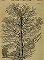 Arboretum et fruticetum Britannicum; or, The trees and shrubs of Britain, native and foreign, hardy and half-hardy, pictorially and botanically delineated, and scientifically and popularly described; (14793647183).jpg