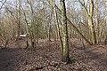 Around Buschgraben Kleinmachnow 2021-02-24 02.jpg