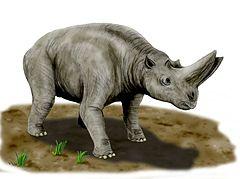 Arsinoitheriidae – Wikipedia, wolna -  9.0KB