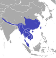 Asian Gray Shrew area.png