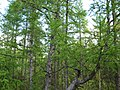 Asinovsky District, Tomsk Oblast, Russia - panoramio (41).jpg