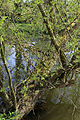 At the River Lee, Fishers Green, Lee Valley, Waltham Abbey, Essex, England 05.jpg