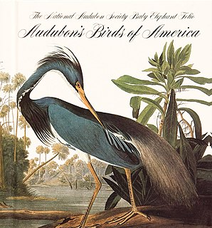 book by naturalist and painter John James Audubon