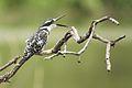 Austin Roberts Bird Sanctuary-066.jpg