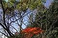 Autumn leaves near Ipponsugi pass - panoramio.jpg