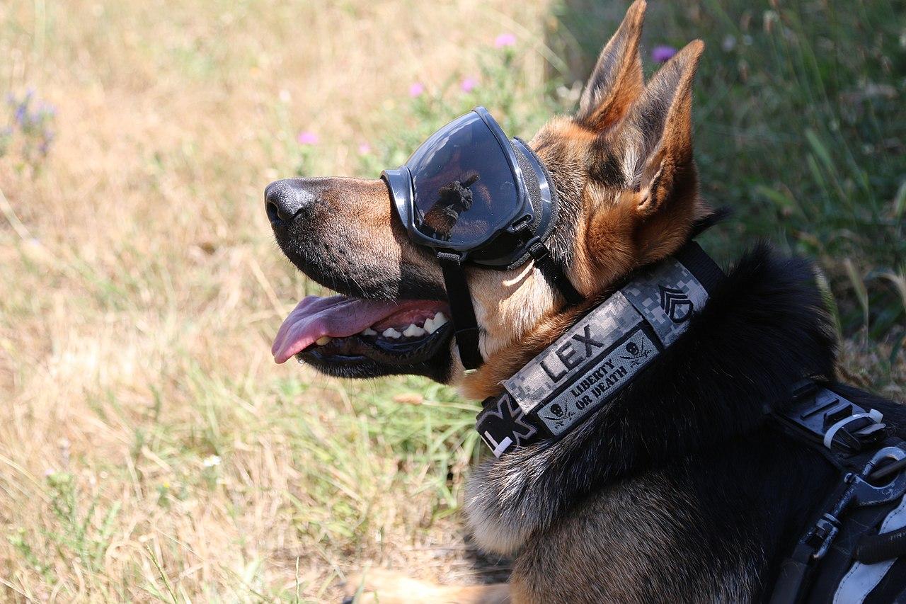 Dogs In Warfare Wikiwand