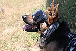 Aviators performs medevac training, military working dogs climb to new heights 150724-A-AB123-004.jpg