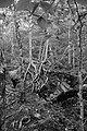 BW Trees (20622714252).jpg