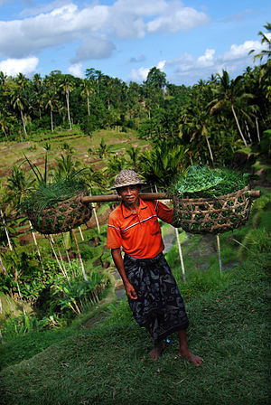 Tegallalang - Farmer